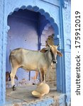 indian ox freely walked in the... | Shutterstock . vector #175912019