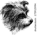 head of shaggy dog | Shutterstock .eps vector #175915994