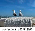 Two Sea Gulls Sitting On A Top...