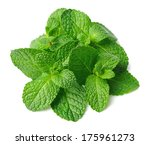 fresh mint close up on white  | Shutterstock . vector #175961273