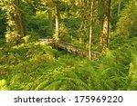 Hidden Bridge In Redwoods...