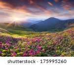 magic pink rhododendron flowers ... | Shutterstock . vector #175995260