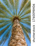 palm tree close up on blue sky... | Shutterstock . vector #1760098406