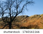 Bare Tree In Shade In A Valley...