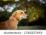 Small photo of brown mutt dog portrait. space for text. puppy playing outside