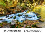 Forest River Stream Water In...