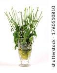Flowerless Flowers In Glass Vase
