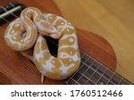 Lovely Snake Ball Python On...