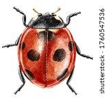 Ladybug Watercolor Illustration ...