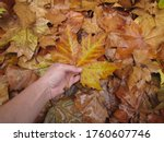 Autumn Is Here  Hand Grabs A...