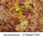 Fall Season. Autumn Is Here....