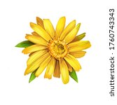 Arnica Yellow Flower Digital...