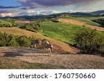 Forli, Emilia Romagna, Italy: landscape of the picturesque hills with cultivated fields and two donkeys