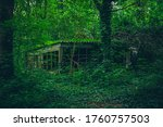 Abandoned Shed In The Woods