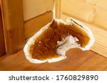 A Large Growing Fungus  Serpul...
