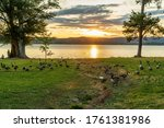 Small photo of Guntersville, Alabama/USA-6/20/20: Photo Depicts a Gaggle of Geese in a Park on Lake Guntersville at Sunset.