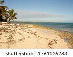 White Sand Beach With Seaweed...