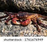 A Crab Laying In The Sun On A...