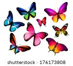 many different butterflies ... | Shutterstock . vector #176173808