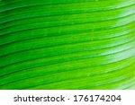 texture background of banana... | Shutterstock . vector #176174204