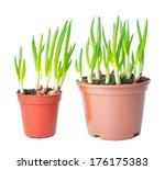 fresh green onion different... | Shutterstock . vector #176175383