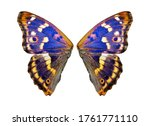 Bright Colorful Wings Of A...