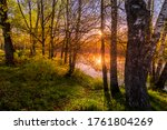 Sunrise or sunset among birches with young leaves near a pond, reflected in the water covered with fog. The sun shining through the branches of trees. - stock photo
