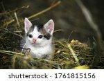 Kitten Laying In A Barn.