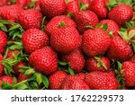 varietal red strawberries close ... | Shutterstock . vector #1762229573
