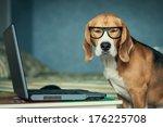 Sleepy Beagle Dog In Funny...