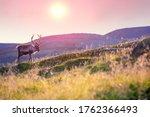 Reindeer grazing in a meadow in ...