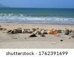 Shells On Beach Close Up