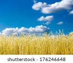 golden wheat field with blue... | Shutterstock . vector #176246648