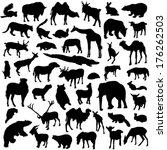 wild animals set | Shutterstock .eps vector #176262503