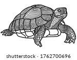 Graphic Indian Star Tortoise...