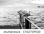 Seagulls Sit On The Pier On The ...
