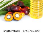 Red Oil Palm Seed And Leaf With ...