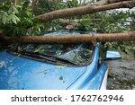 Broken Tree Fallen On Top Of...