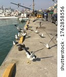Small photo of Photograph of a seagull's instantaneous movement