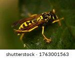 Wasp. Ultra Macro Photo. Wasp...