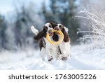 Two Dogs In The Winter In The...