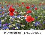 Colorful Blooming Wildflowers...
