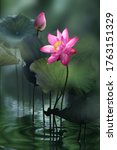 Fine Art   Beautiful Pink Lotus ...