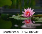 The Lotus Radiates The Energy...
