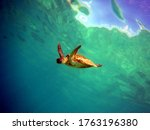 Turtle Swimming With A Stunning ...