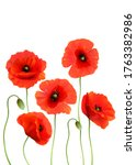 beautiful red poppies... | Shutterstock .eps vector #1763382986