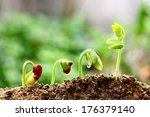growing plants | Shutterstock . vector #176379140