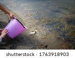 Childen Fishing Crabs In The...