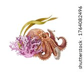 Octopus With Coral Reef Fauna...