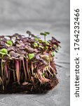 Red Cabbage  Fresh Sprouts And...